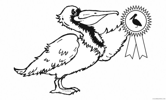 Pelican Coloring Pages 23th grade Printable Coloring23free