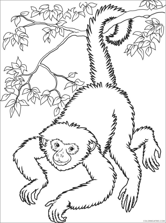 Monkey Coloring Pages Animal Printable Sheets realistic monkey in