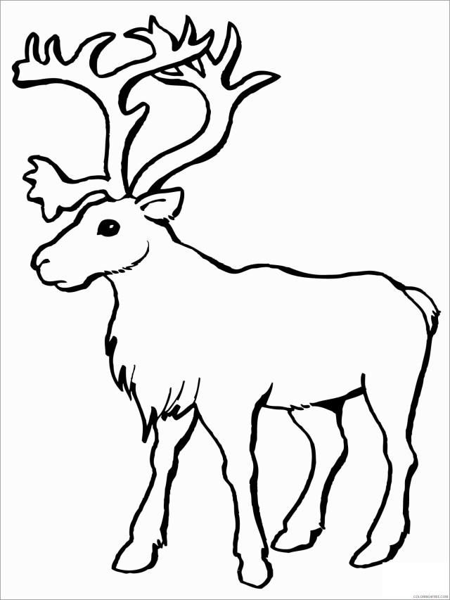 Reindeer Coloring Pages Animal Printable Sheets printable reindeer