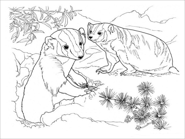 Coloring Pages Of Honey Badgers - ColoringBay