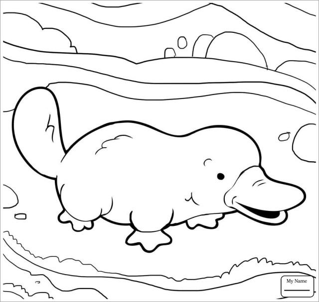 Easy Platypus Coloring Page - ColoringBay