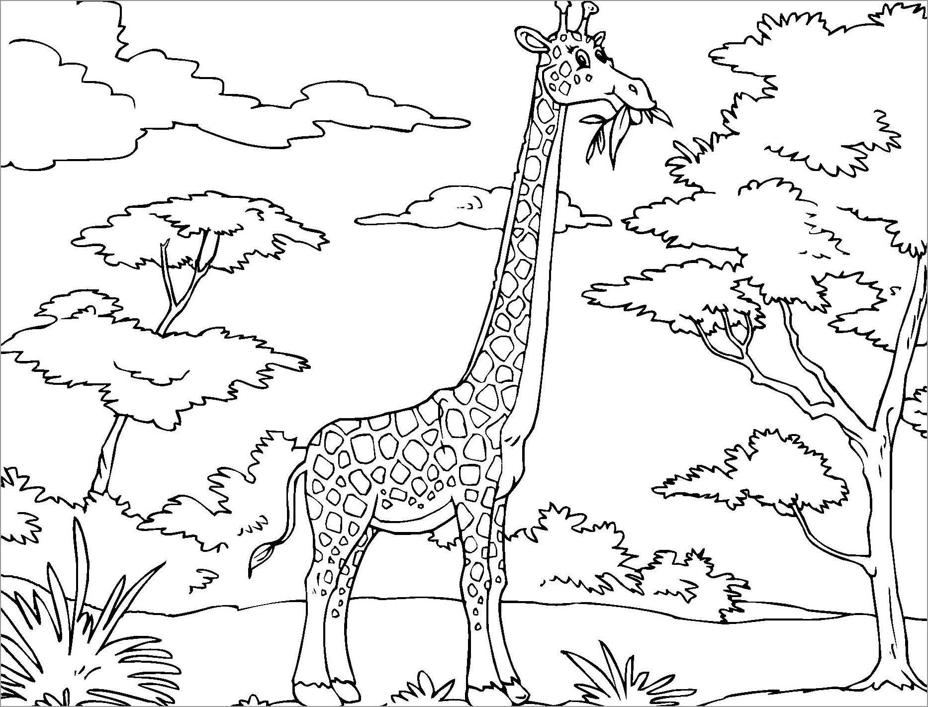 Funny African Giraffe Coloring Page Coloringbay