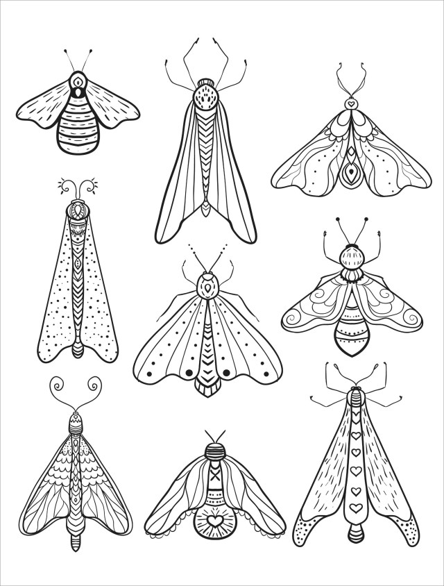 Moth Coloring Page to Print - ColoringBay