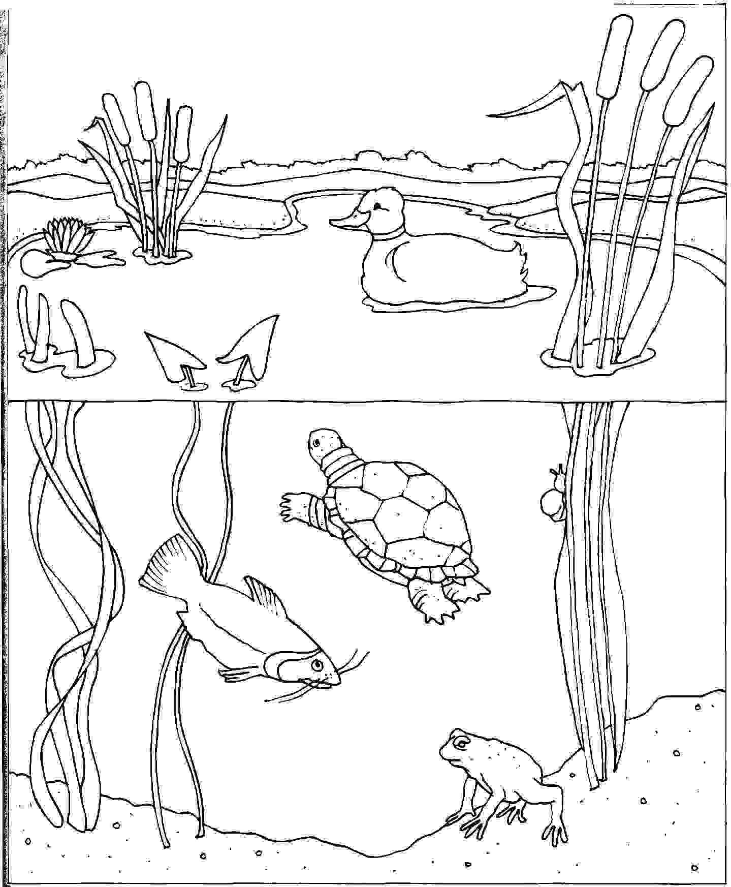 Coloring Page Water Cycle