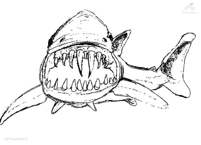 Shark Colouring Pictures To Print High Quality Coloring Pages