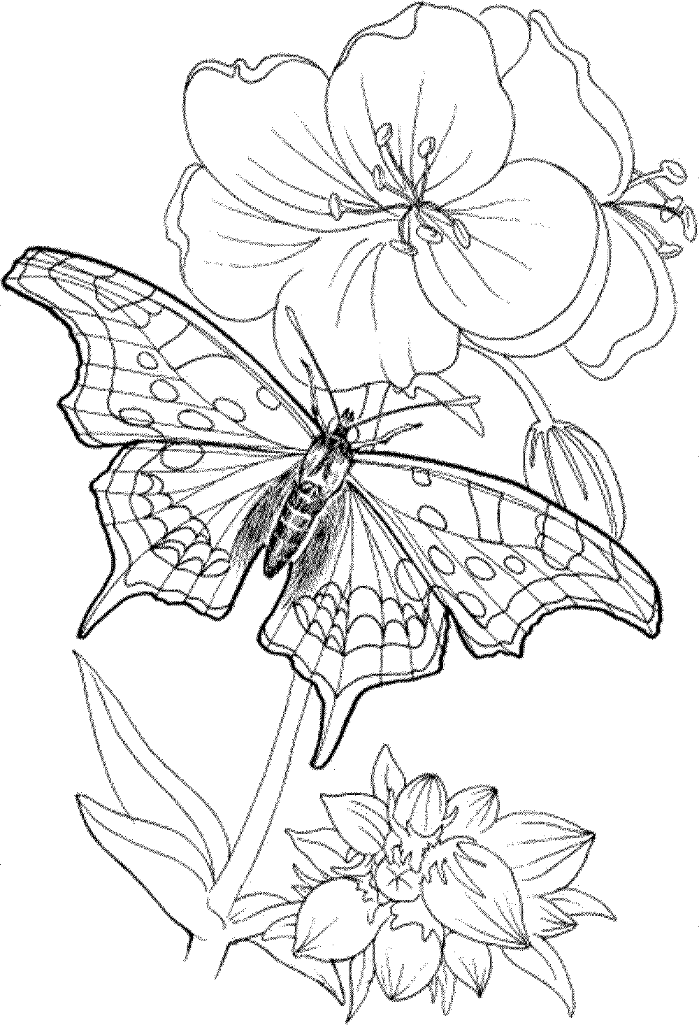 Free Printable Coloring Pages Adults Only - Coloring Home | free printable colouring pages for adults