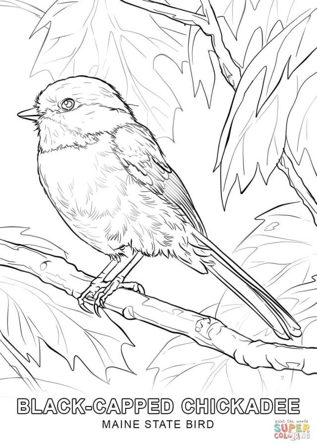 Coloring pages for new jersey state bird