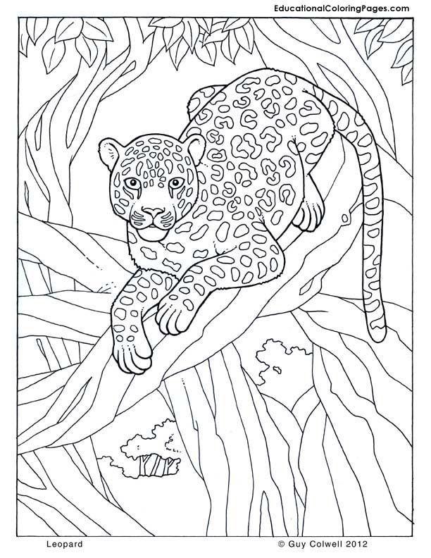 Adult Coloring Pages Safari - Coloring Home   free printable coloring pages safari animals