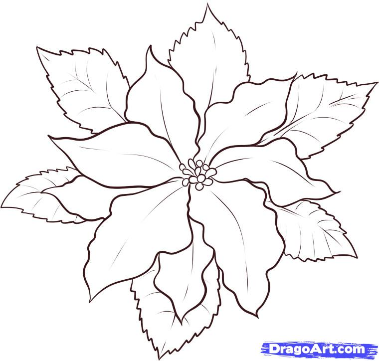 Poinsettia Outline 84471 DFILES Coloring Home