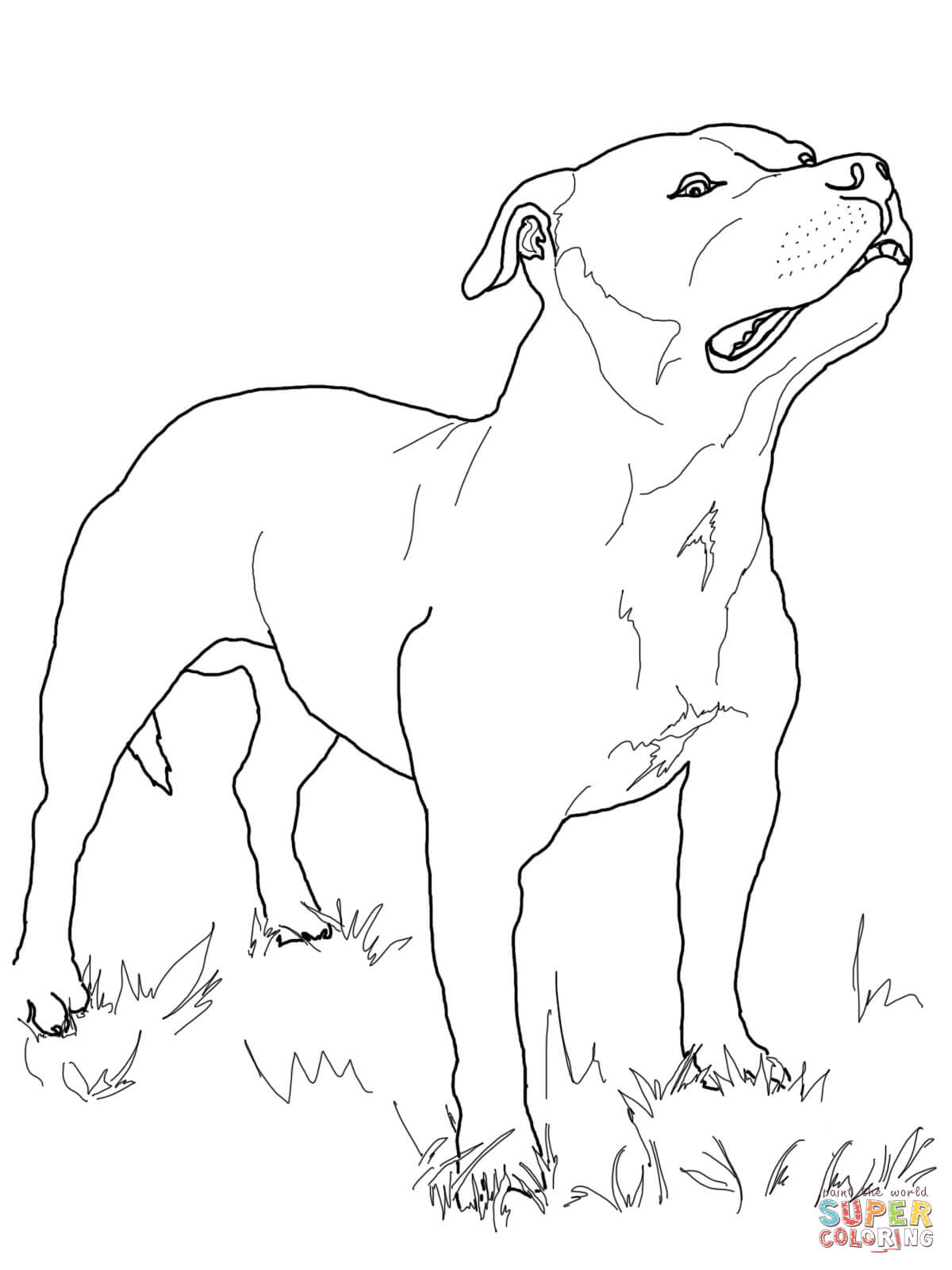 Free Coloring Pages Ferdinand The Bull
