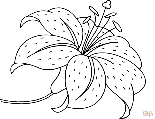 Tiger Lily Coloring Pages - Coloring Home