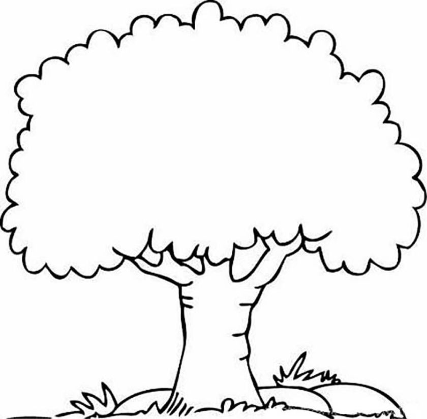 palm tree coloring pages to print  coloring home
