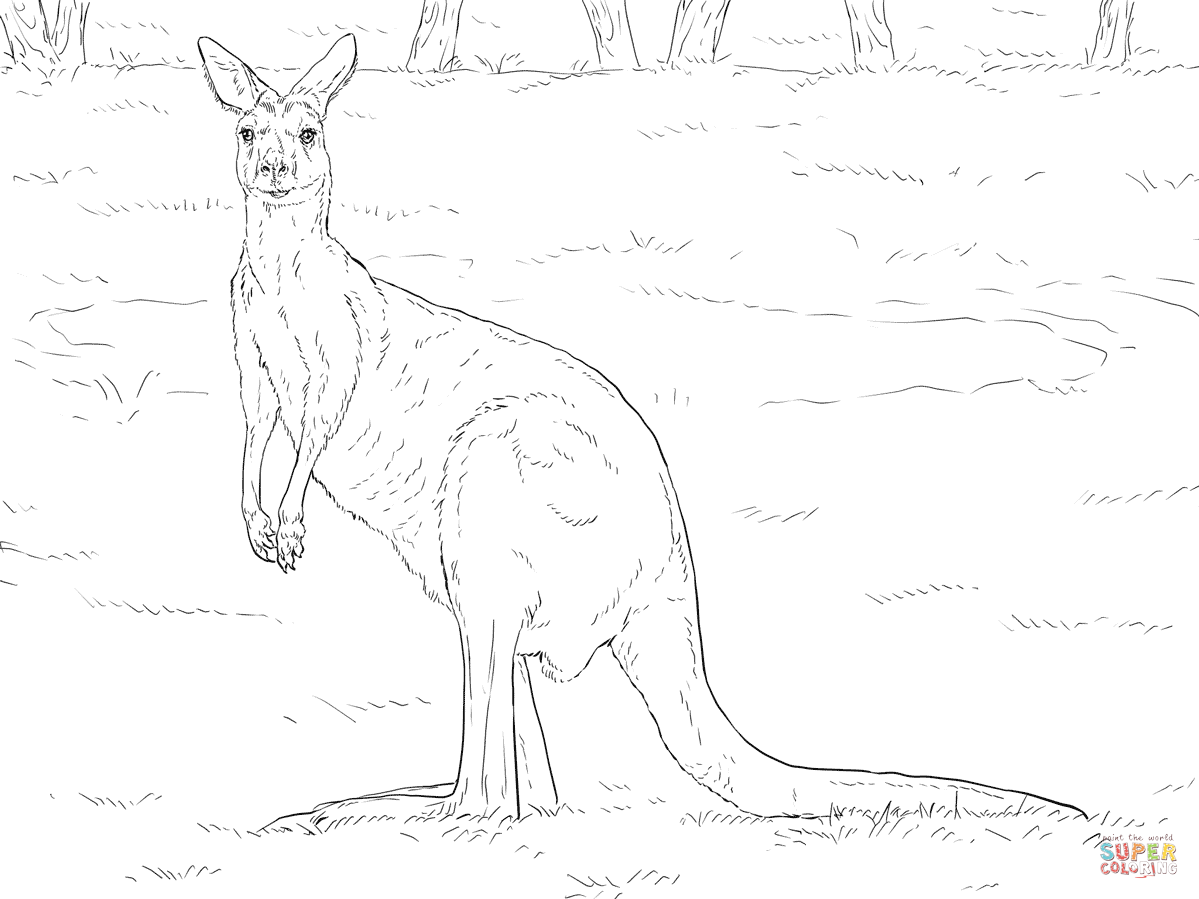 Kangaroo Coloring Page Cute