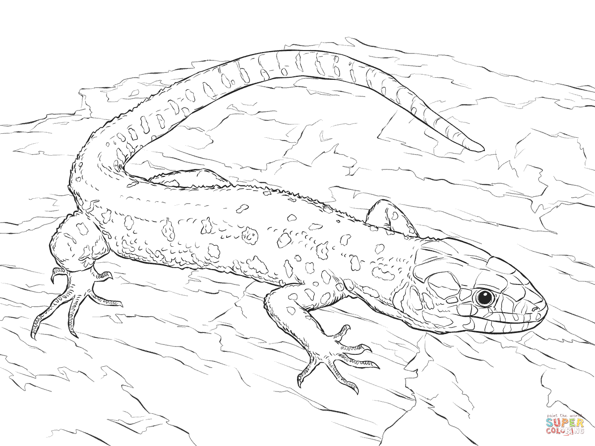 Coloring Pages Of A Lizard