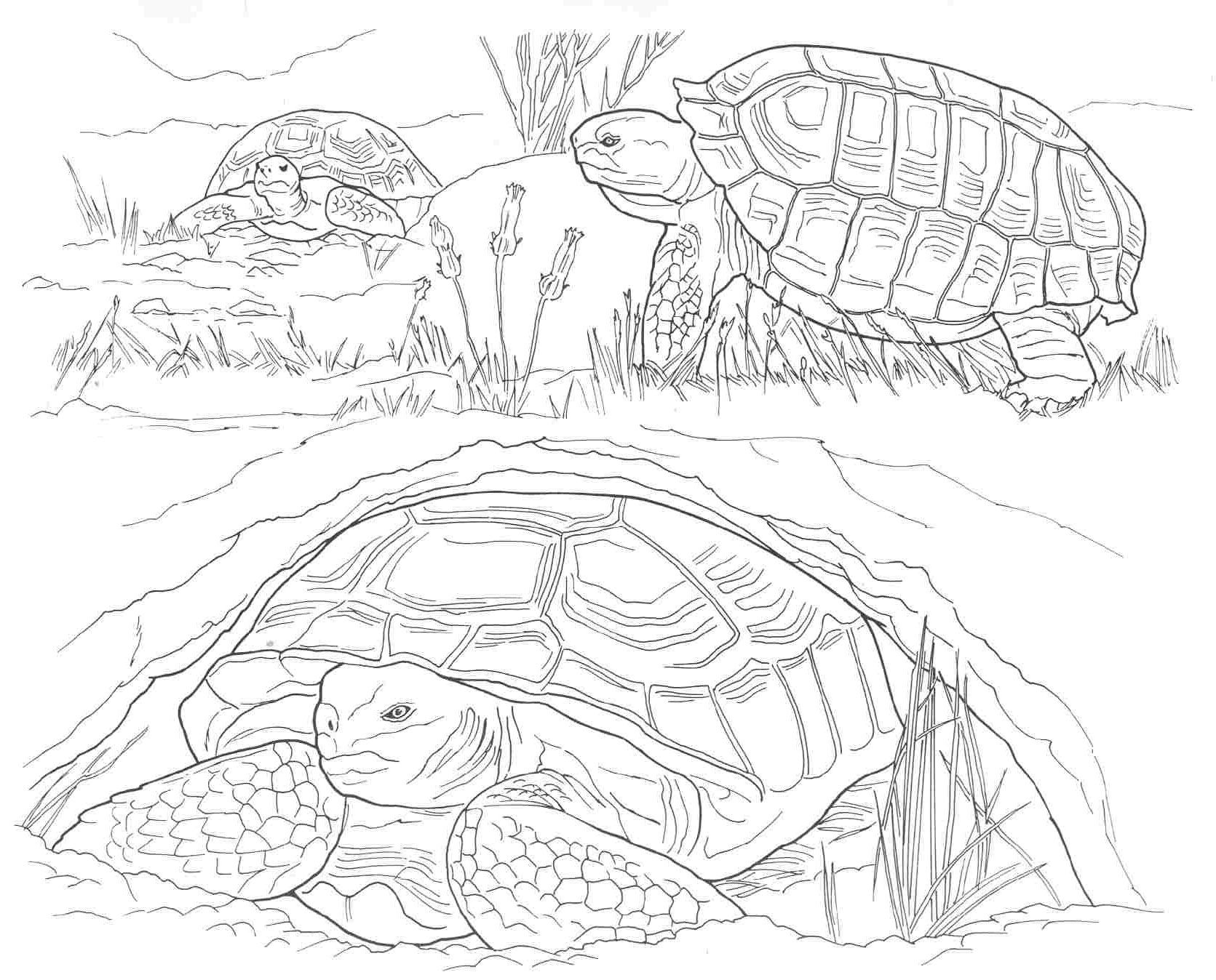 Printable Coloring Pages Of Desert Animals