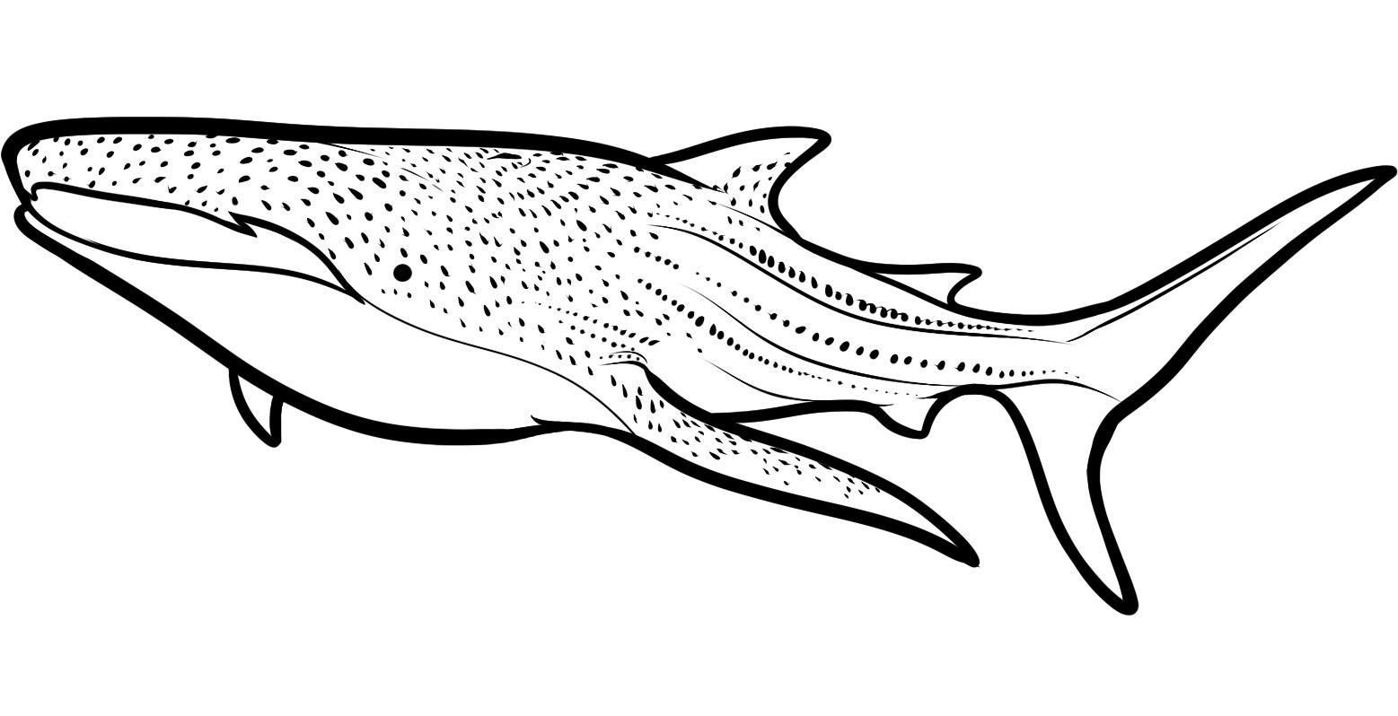 Free Shark Coloring Pages To Print