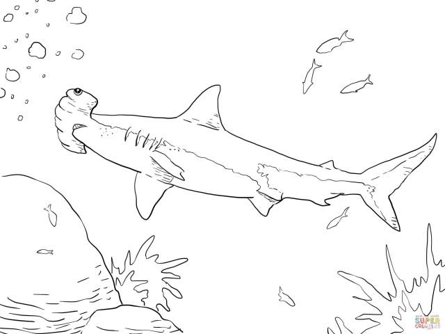 Great Hammerhead Shark Coloring Page  Free Printable Coloring