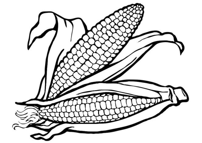 indian corn coloring pages | Coloring Page for kids