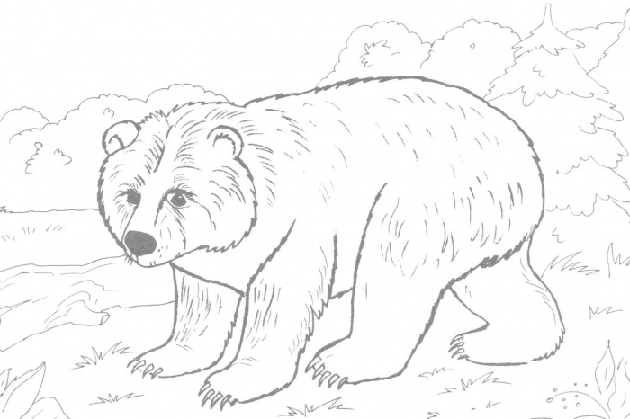 bear coloring pages 1 coloring kids