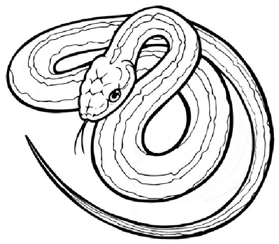 free kids snake coloring pages 6 activities snake coloring pages 6