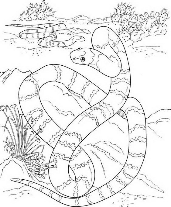 snake coloring pages 7 coloring kids