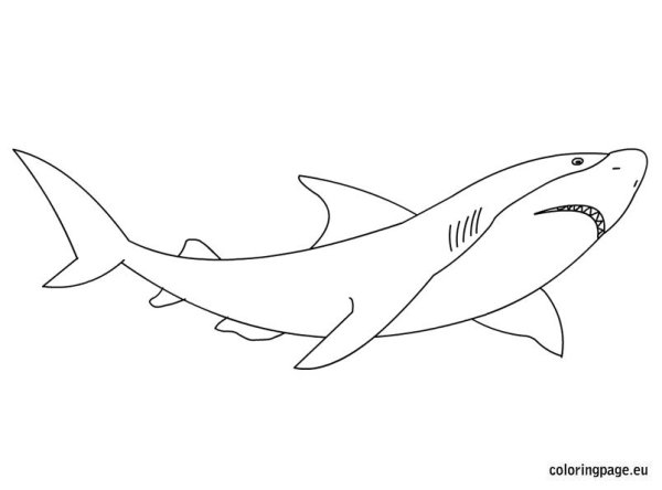great white shark coloring pages # 7