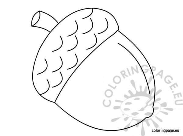 acorn coloring page # 5