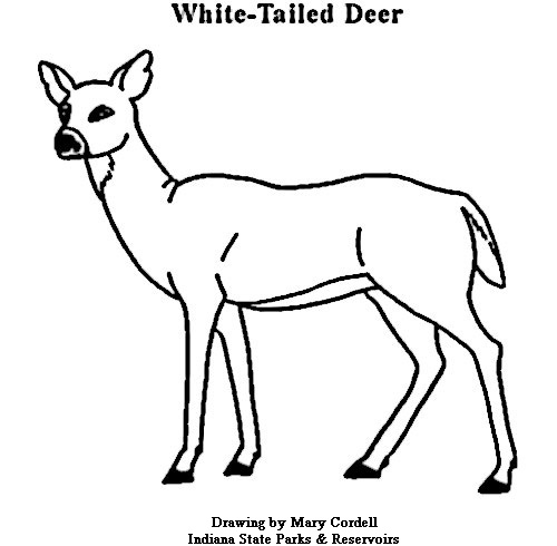 golden freddy coloring sheets coloring pages top 20 deer coloring