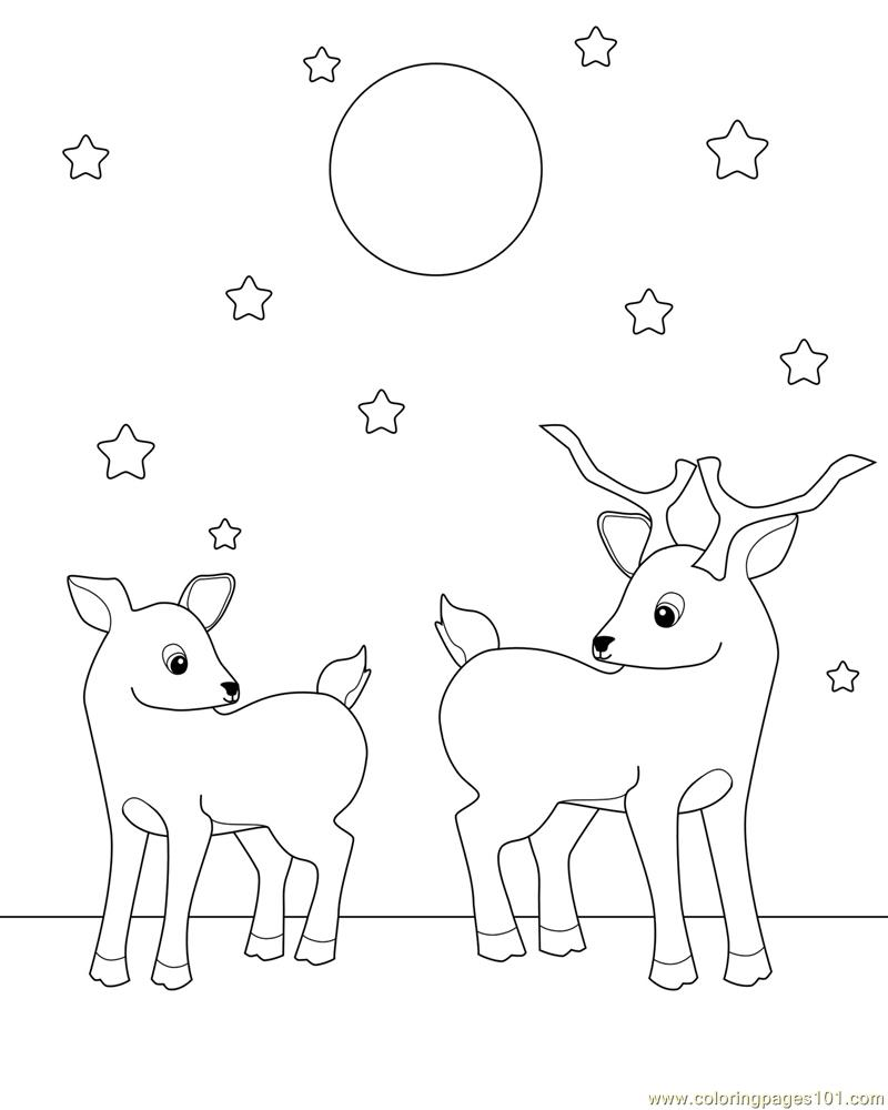 deer coloring pages images cooloring com
