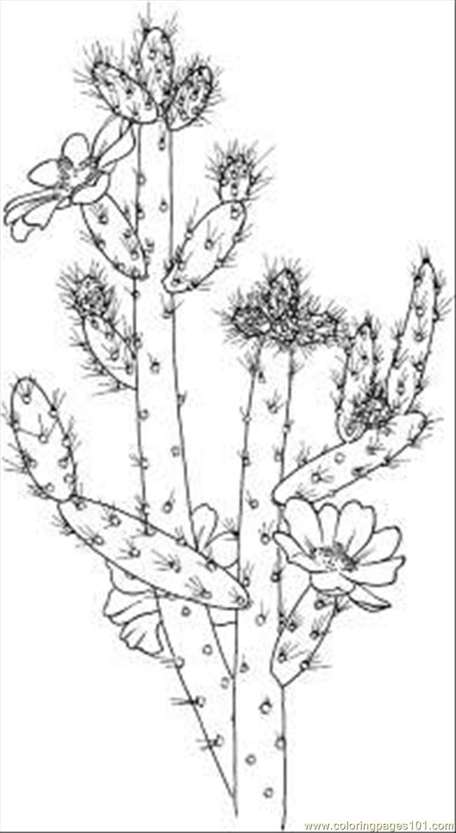 Cactus Coloring Pages | Coloring pages, Cactus printable, Coloring ... | 1187x650