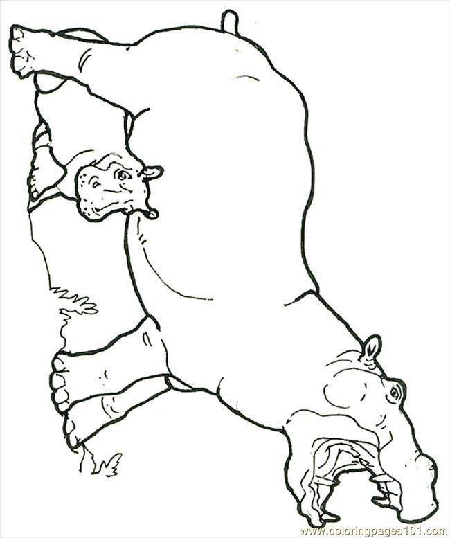 printable hippo cartoons page baby hippo
