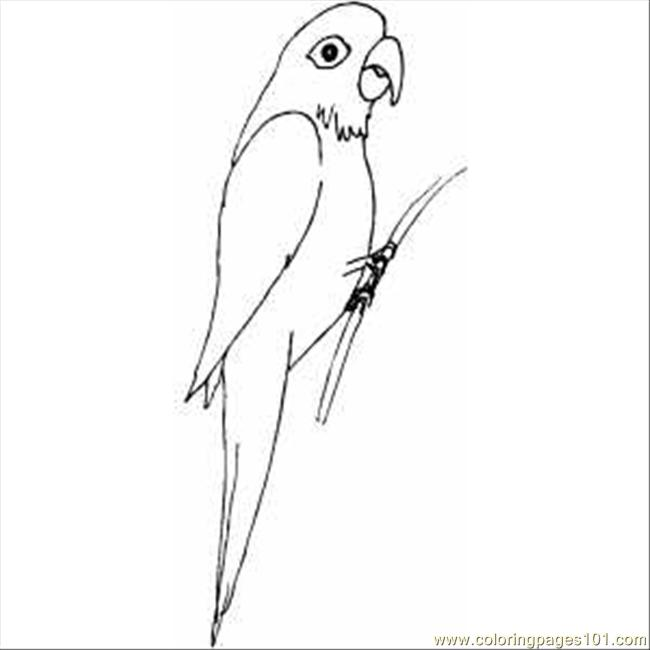 macaw coloring pages print pictures