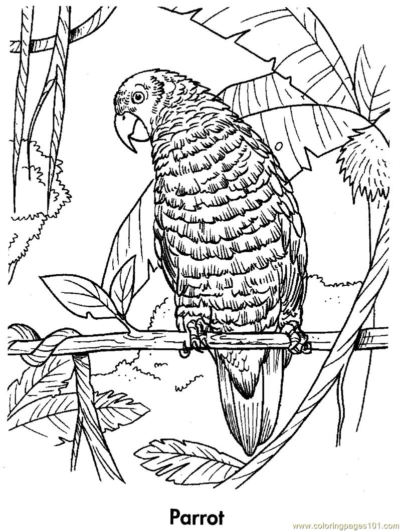 parrot coloring picture pictures to pin on pinterest