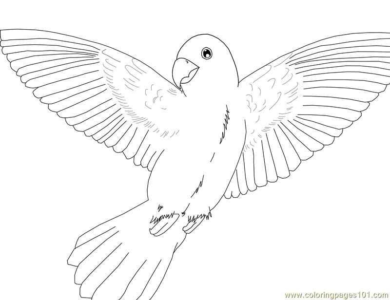 coloring pages parrot birds gt parrots free printable coloring page