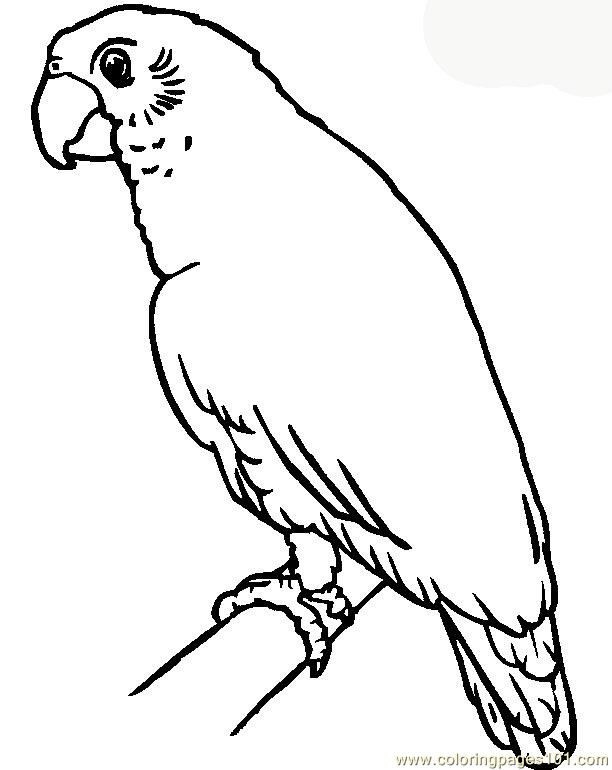 parrot coloring page free printable coloring pages