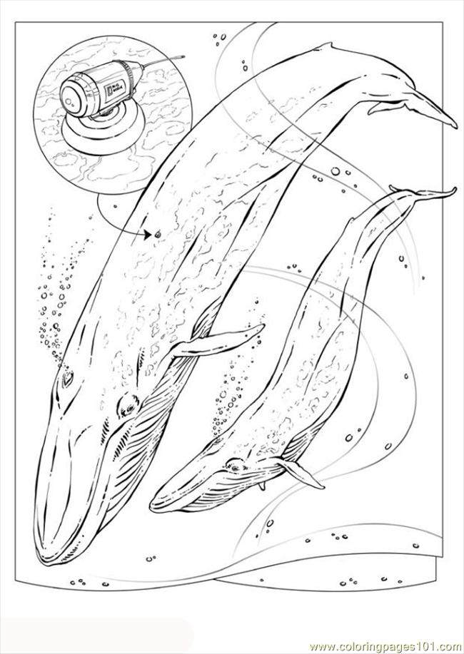 coloring pages additionally how to train your dragon coloring pages