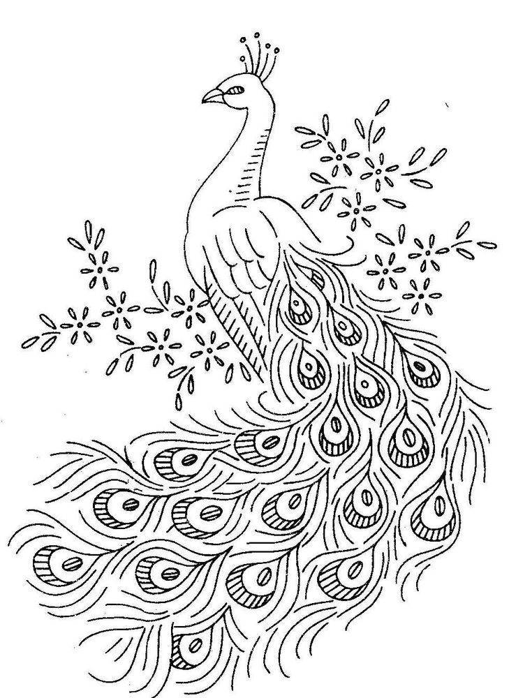 Birds Coloring Pages to Knowing the Kind of Birds Name ...