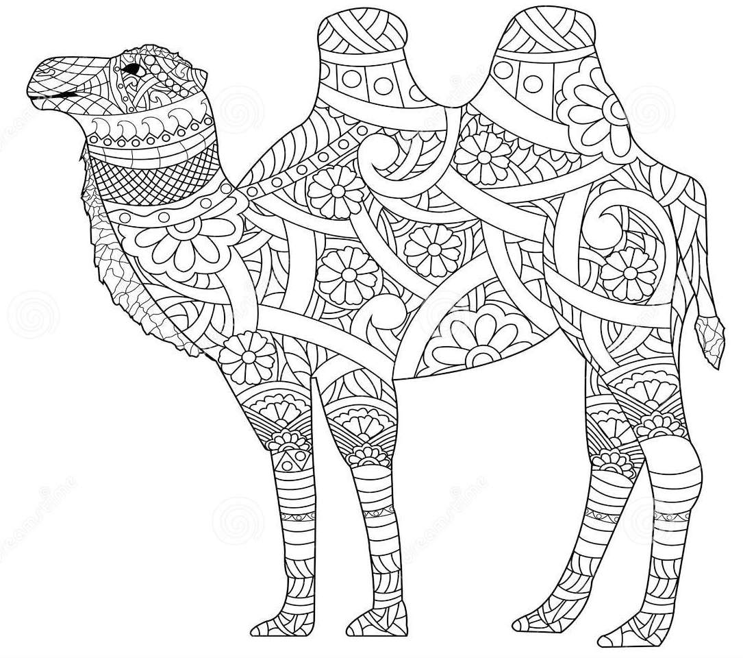 anti-stress-adult-zentangle-camel-coloring-page