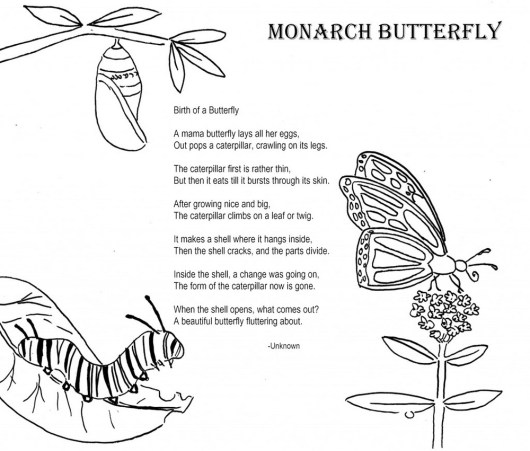 beautiful-butterfly-coloring-page-life-cycle