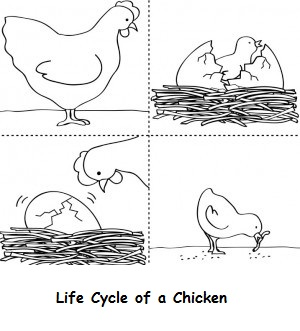 Life Cycle of Various Animals Coloring Pages Coloring Pages