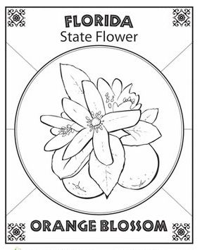 Florida state flower coloring page symbol for Florida state symbols coloring pages
