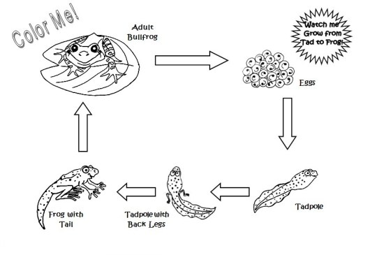 frog-life-cycle-coloring-page-to-print