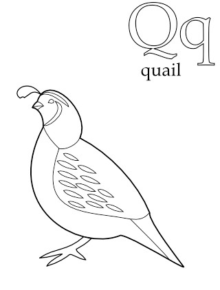 quail-california-state-bird-coloring-book