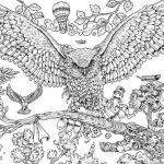Animorphia Owl Coloring Book
