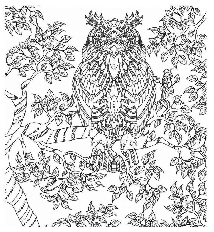adorable-owls-coloring-page