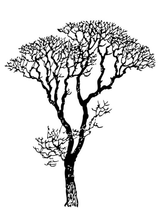 bare tree and branch coloring sheet
