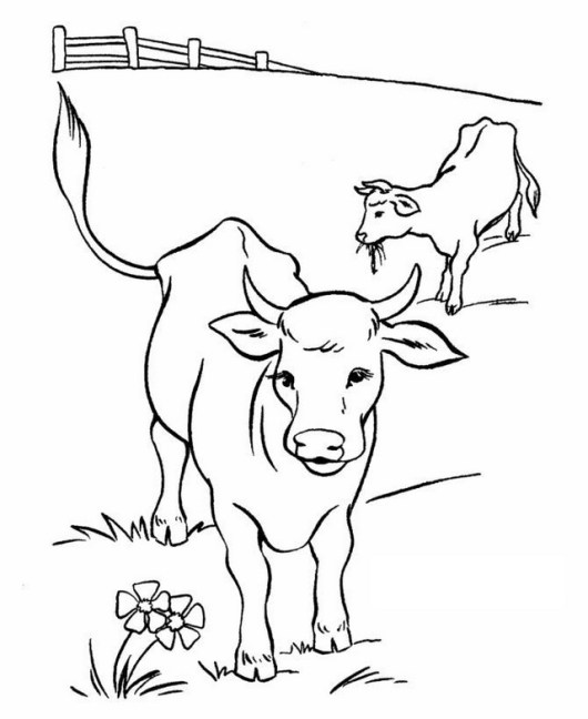 2 cow coloring pages