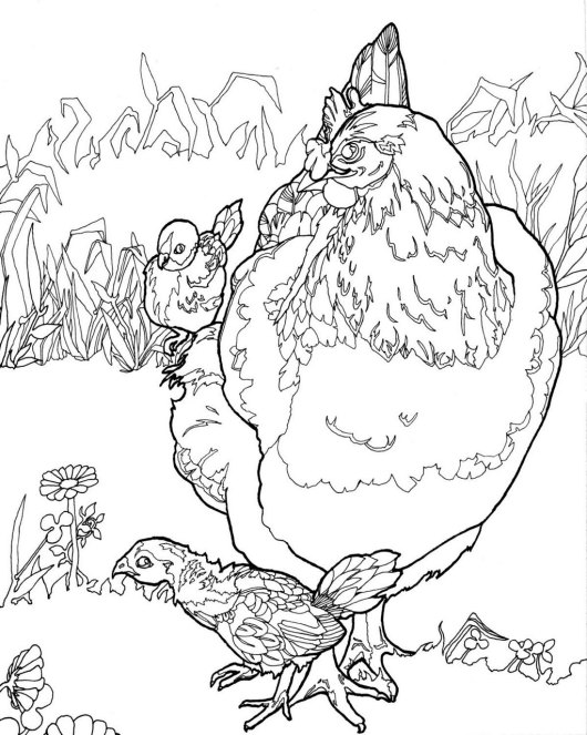 chicken and baby coloring page