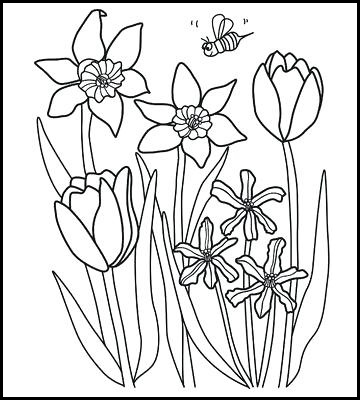 spring tulip flower coloring picture