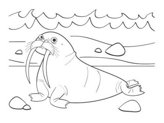 fun walrus coloring and drawing page